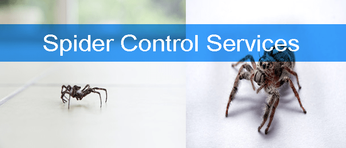 Eco-friendly Spider Control Services