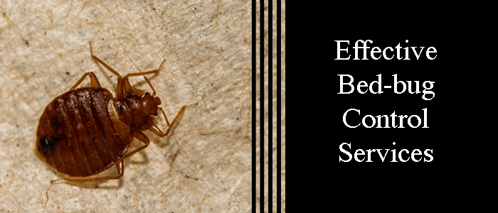 Effective Bed Bug Control Services