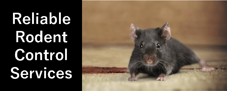 Reliable Rodent Control Service