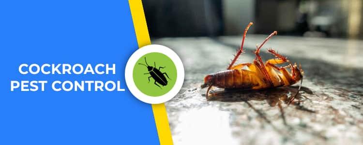 Cockroach Control Baldivis